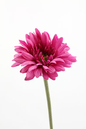 Gerbera Real Touch Artificial Flower - Magenta 60cm