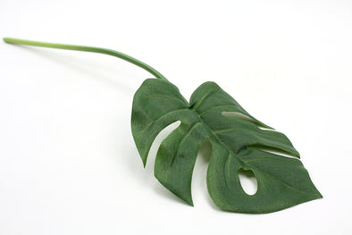 Monstera Green 56cm