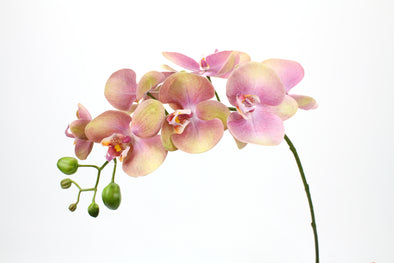 real touch phalaenopsis orchid stem