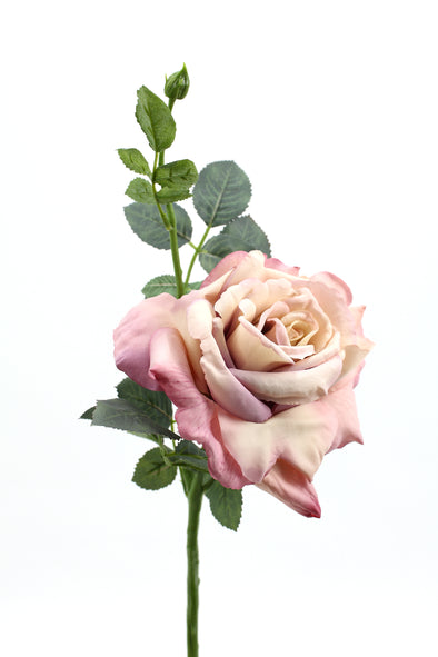 Quiannie Rose Antique Pink 35cm