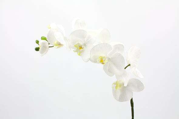 white real touch orchid stem