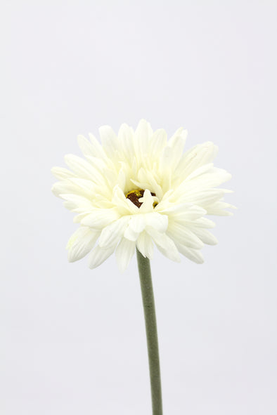 Gerbera Real Touch Artificial Flower - White 60cm