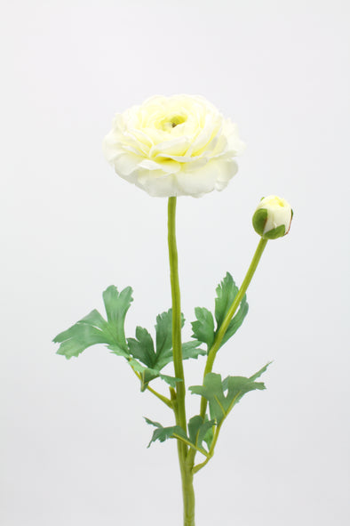 Ranunculus Spray White 50cm