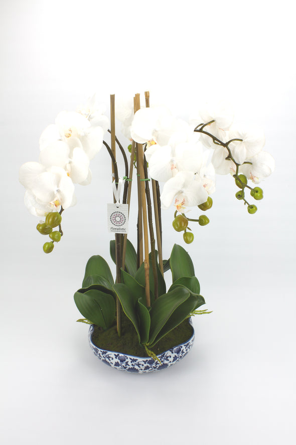 White Phalaenopsis Orchid Artificial Flower Arrangement In Blue & White Dynasty Pot - Real Touch