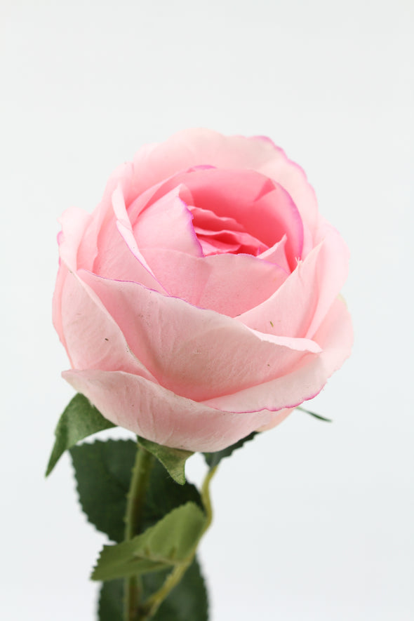 Rose David Austin Early Bloom Artificial Flower - Pink Real Touch 69cm