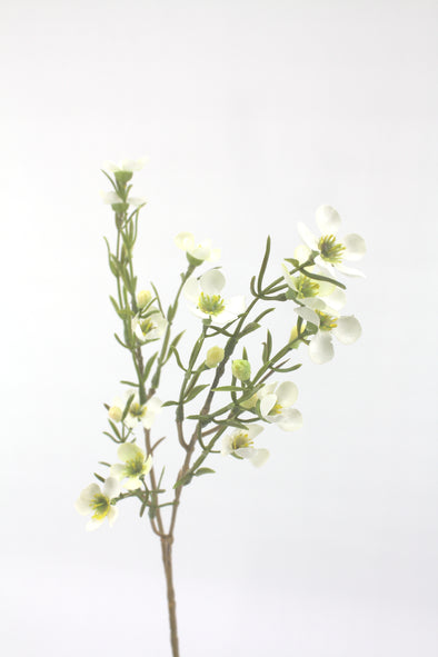 Artificial Geraldton Wax Flower Stem