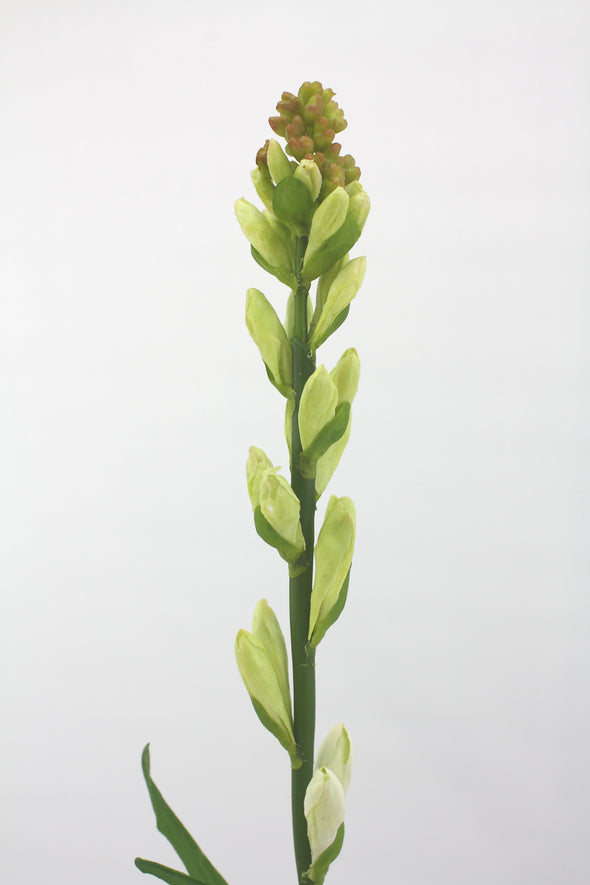 Tuberose Bud Artificial Stem - Cream Green 80cm