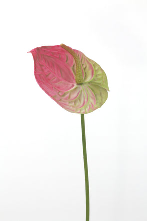 Anthurium Artificial Flower Stem -  Burgundy Green 60cm