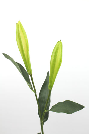 Casablanca Lily Bud Spray Green 84cm