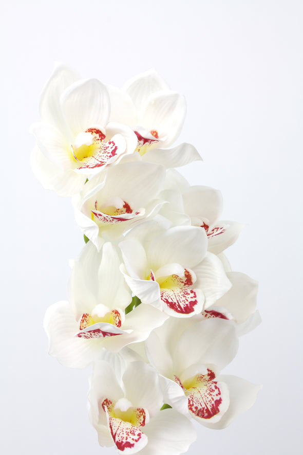 Orchid Cymbidium White Real Touch 70cm