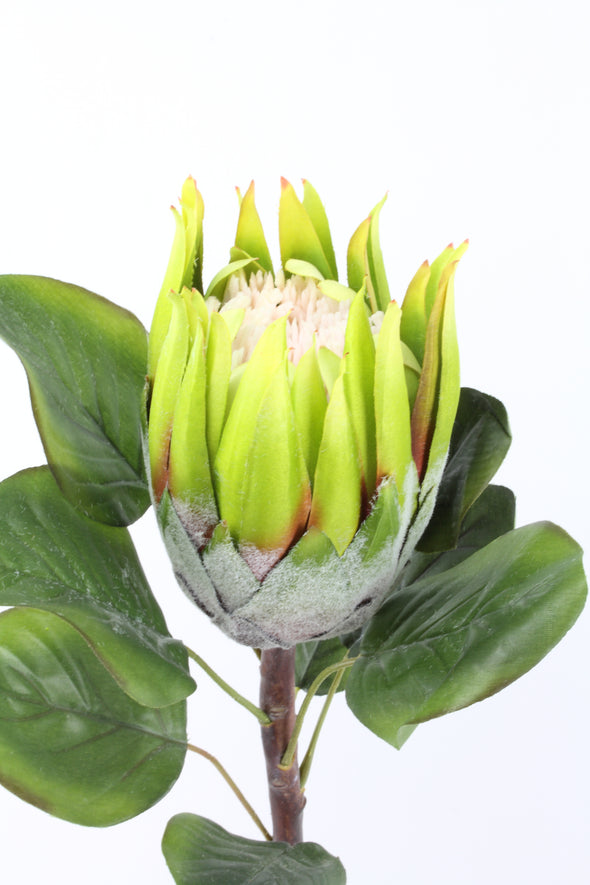 Protea Large Queen Green 62cm