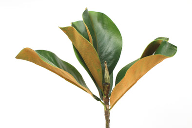 Magnolia Leaves Real Touch 35cm