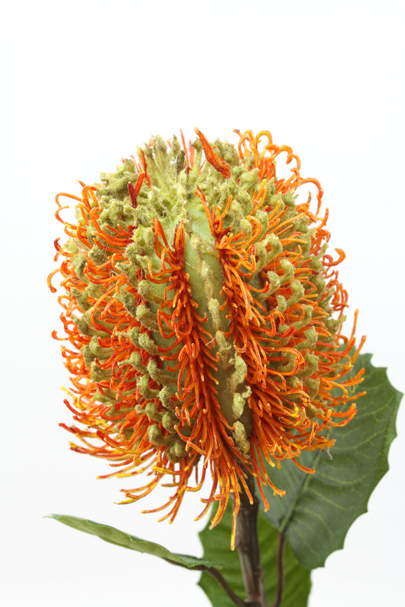 Banksia Artificial Flower - Orange Green 56cm