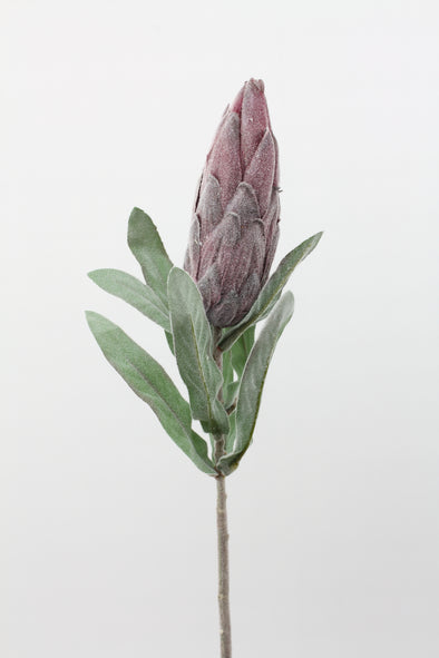 Prince Protea Spray Burgundy Dark Purple 68cm