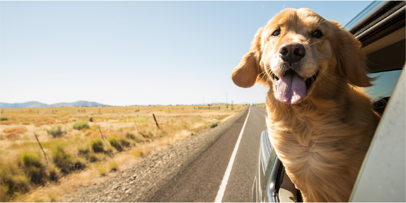 What Does Brexit Mean For Travelling With Your Pet?