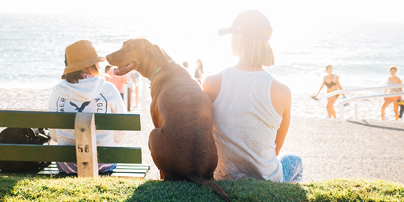 How To Keep Your Dog Healthy & Happy This Summer