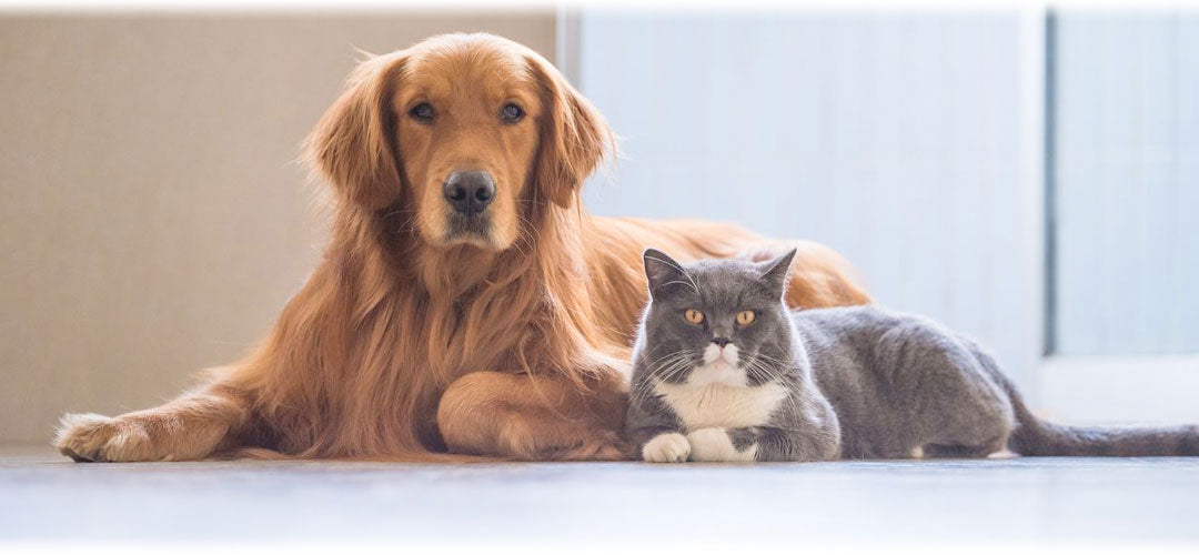 How to keep your pets healthy