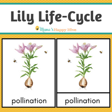 Load image into Gallery viewer, Lily Life-Cycle Montessori 3-Part Cards & Spinner