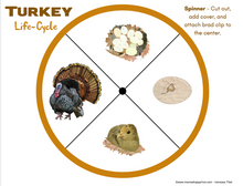 Load image into Gallery viewer, Turkey Life-Cycle