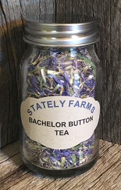 Bachelor Button