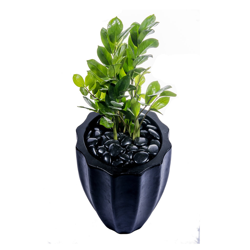 Grolife Eco Pebbles - Black - Carton (5) - Grolife Eco Products