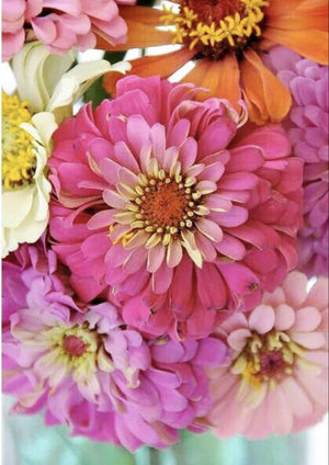 Pink Picasso Paint By Numbers- Zelous Zinnias