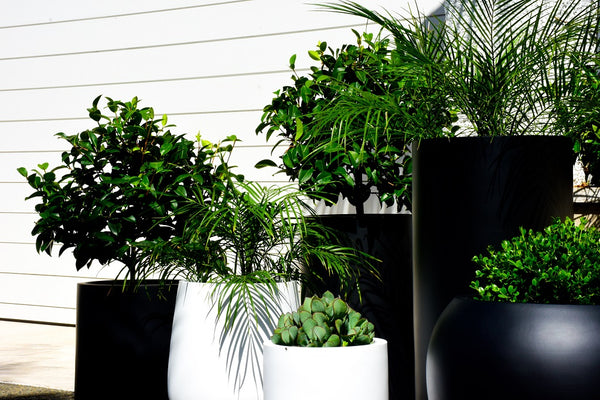 Premium Potted Plant Package