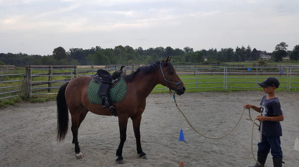 Positive Way Horsemanship training session