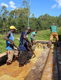 Image of Smallholder farmers washing the coffee berries used for the Burundi - Kayanza coffee.