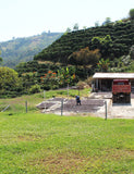 The Santa Barbara Estate in Colombia, the farm that is used for the Colombia - Santa Barbara blend.