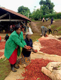 Another image of farmers harvesting the coffee berries that are used in the Africa Series Pack.