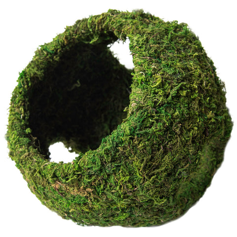 Reptile Mossy Cave with Holes by Galapagos (8 Inches)