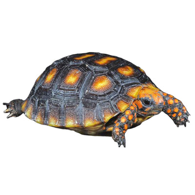 Cherry Head Red Foot Tortoises
