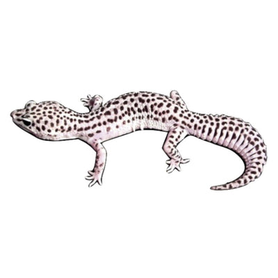 Super Snow Leopard Geckos