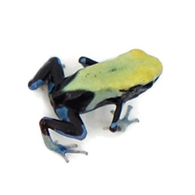 Yellowback Tinctorius Dart Frogs