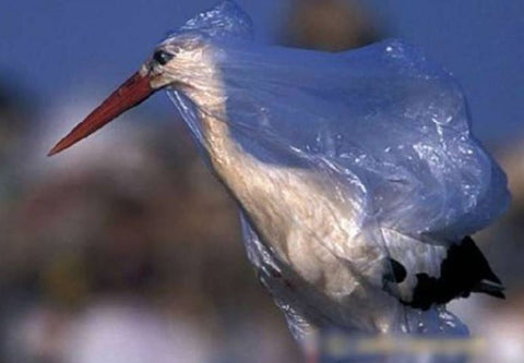 bird plastic bag pollution prevention