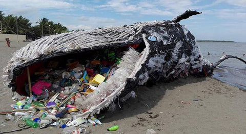 whale-plastic-pollution