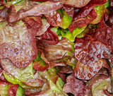 "Romaine Lettuce - Cimmaron,100% Organic ""HEIRLOOM"" Seeds: 200+, Grown in USA - Eagle Art"