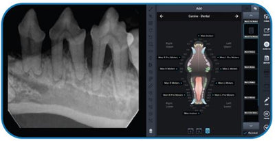 MasterDent: Veterinary Dental Digital X-ray Sensor with software