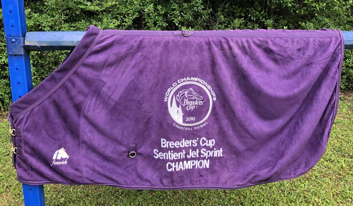 "★ EquSuede 82"" Cooler/Blanket Breeders' Cup 2010  Sentient Jet Sprint ★ Year of Big Drama & Dubai Majesty - Fenwick Equestrian"