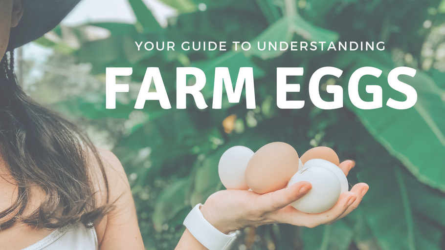 Guide To Understanding Farm Eggs