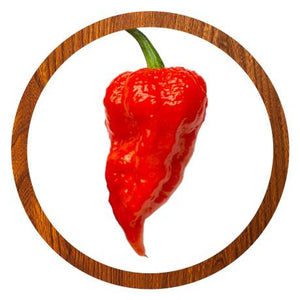 Bhut Jolokia Red Chilischote