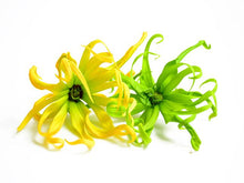 Load image into Gallery viewer, Ylang Ylang sensory dough