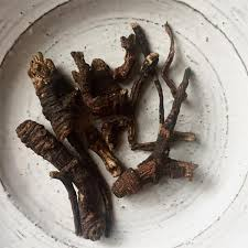 Native healers considered Osha a power plant. As it is only partially water soluble it is best chewed or taken as tincture. Osha Root induces profuse sweating, so can be used as a diaphoretic to ward off infections such as influenza. It soothes sore throats and as a syrup, it can be used to treat bronchitis and asthma. The tea makes a good stomachic bitter that can be used to soothe indigestion and similar complaints.  Magical The root can be used as a talisman and to 'potentiate' the contents of a 'medicin