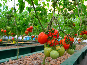 Sustainable Aquaponic System of Growing Food Gains Recognition