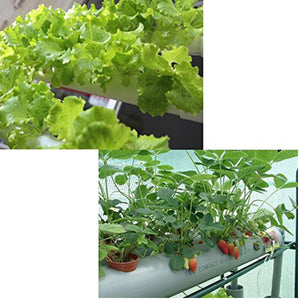 White 2 Layers Hydroponic Grow Kit Plastic 8 Plant Holes - Aquaponic Warrior