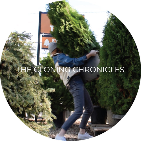 The Cloning Chronicles