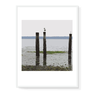 Lone Seagull Limited Edition Print