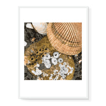 Load image into Gallery viewer, Shells Limited Edition Print
