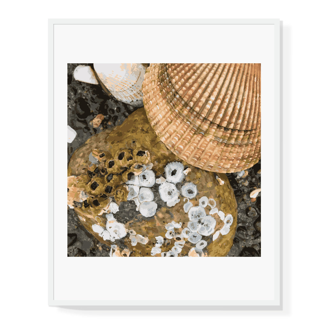 Shells Limited Edition Print
